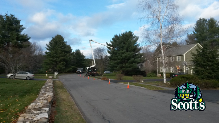 tree removal, pine tree, westford, ma, scotts tree and landscape, tree care, crane tree removal