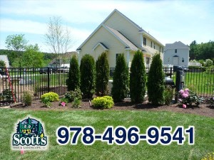 Tree planting and landscaping in Westford, MA