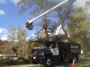 Nor'easter Tree Removal in Westford, MA
