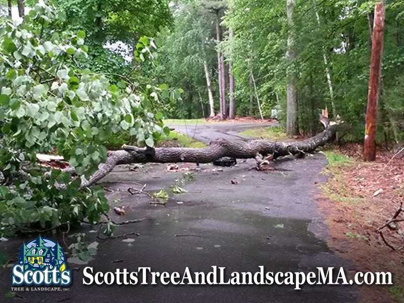 Tree fell on Carlisle Road in Westford, MA