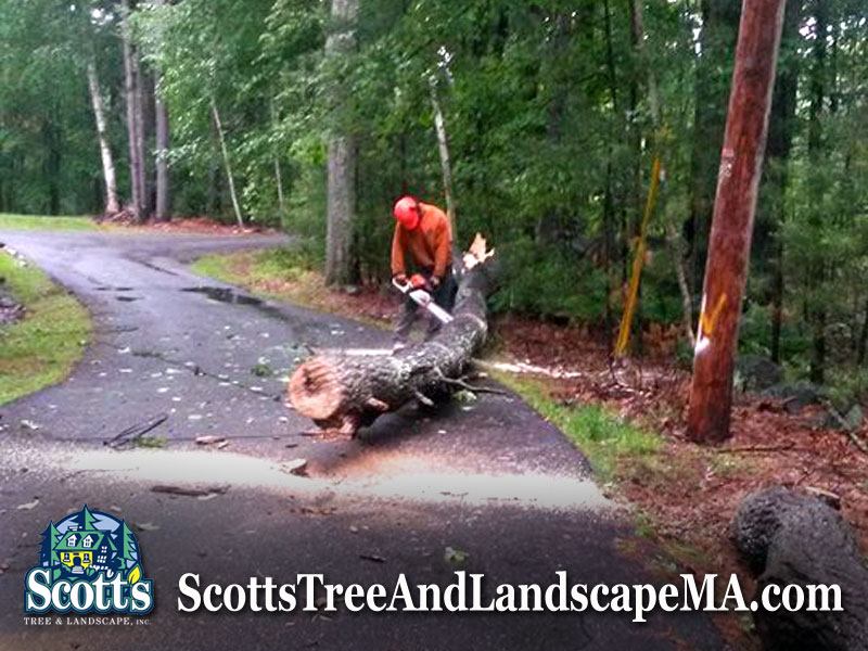 Tree removal in Westford, MA with a Chainsaw