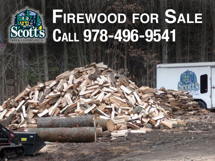 Firewood for sale in Westford, MA. $300 a cord.