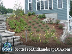Planting and commercial landscaping in Acton, MA